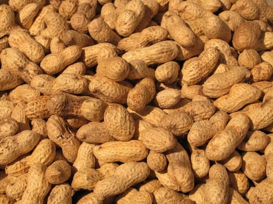 Erdnüsse für das Immunsystem
